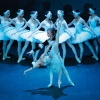 Schwanensee • Russisches Nationalballett